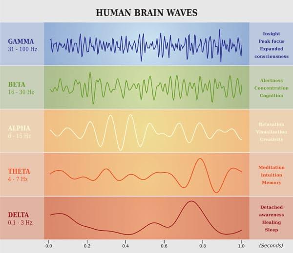 Human brainwaves diagram